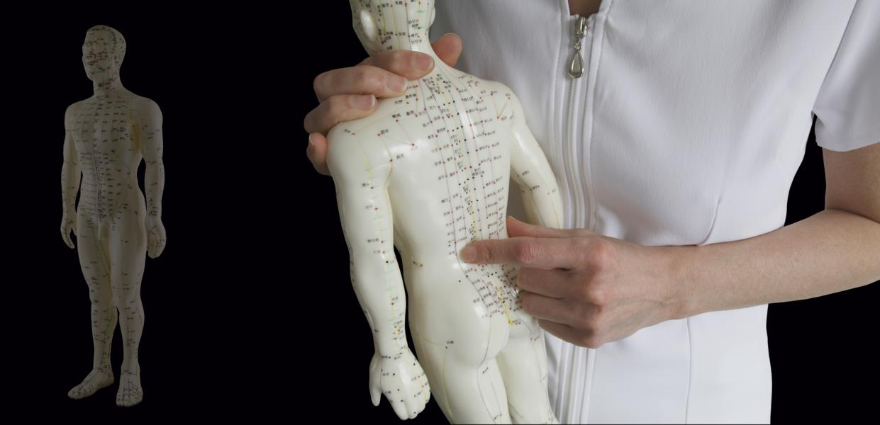 Acupuncture Model – Traditional Chinese Medicine